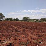 Bwiko farm - new papaya seedlings